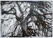Tree Etching